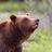 @grizzlybear399