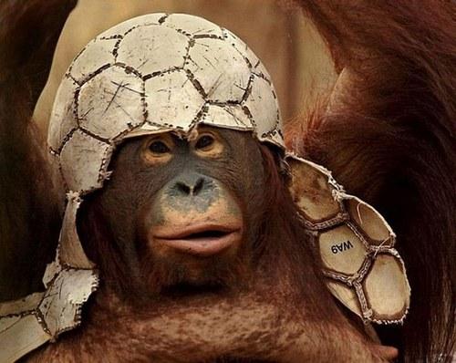 Fotbal 24