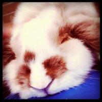 h@shiko-ん | Social Profile