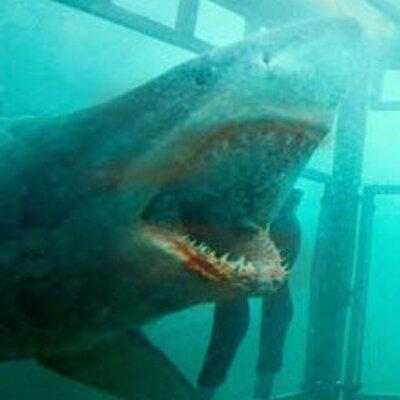 SharkNight3D   Social Profile
