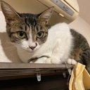 迷い猫ハナ
