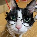 ねこぶちょう 猫専用家具販売