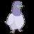 pigeon1985