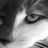 The profile image of Wilde_katze