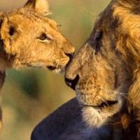 Zee Lions | Social Profile