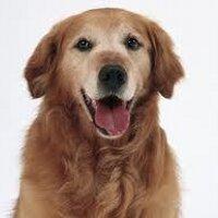 日の丸番犬隊 | Social Profile