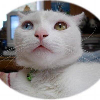 喜代子姉   Social Profile