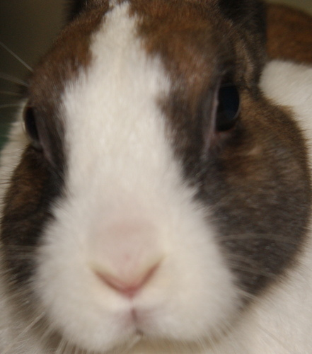 兔の生活が第一(脱原発に一票) Social Profile