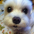 The profile image of wakakusakomachi