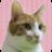 ハヤシミチコ Twitter icon