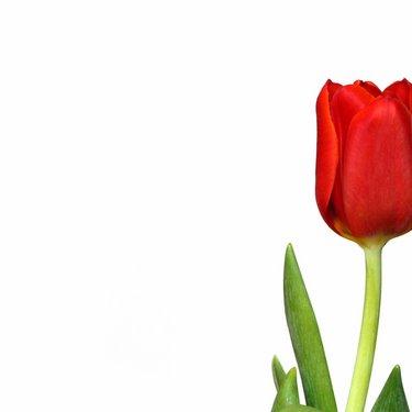 Auckland Florists   Social Profile