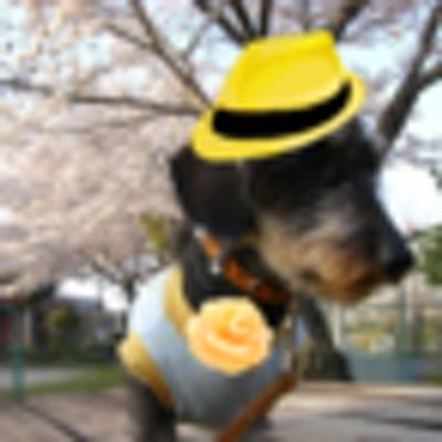 みりぃ | Social Profile