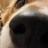 ひ~犬のアイコン
