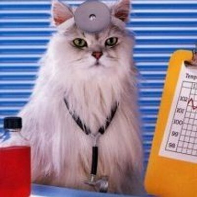 猫山司 | Social Profile
