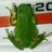 m_ngn_frog