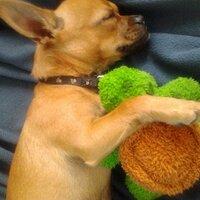Pet Supplies | Social Profile