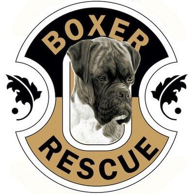 Boxer Rescue LA | Social Profile
