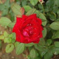 Rose Marie | Social Profile