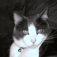 Yves St. Papillon   Social Profile