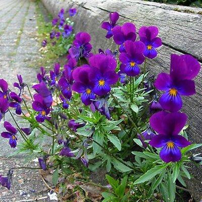 Violet Benny | Social Profile