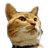 lovetigers_cat