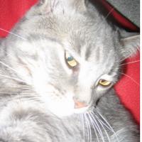 Captain Meow-meows | Social Profile