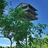 Birdhouse green lg normal