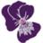 VioletAgnes