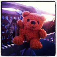 fat_teddy