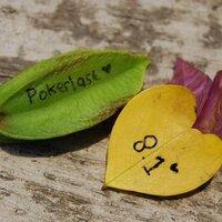 P♦KERL♠ST! | Social Profile