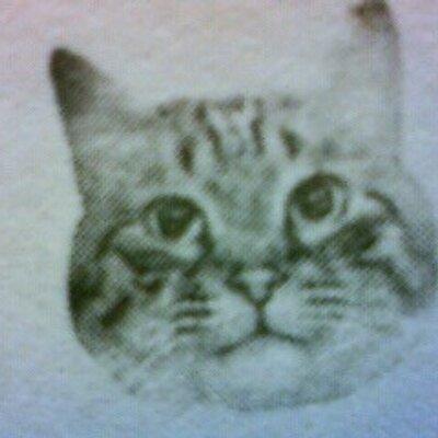 kitten | Social Profile
