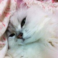 いおりり ゆか | Social Profile