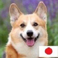 北のコーギー【ネット保守連合】北海道所属 | Social Profile