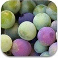 enobytes wine online | Social Profile