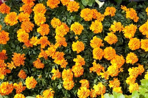 Abeceda zahrada