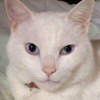 猫の小太郎 | Social Profile