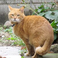 ネコ丸 | Social Profile