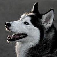 Xu The ANIMALS LOVER | Social Profile