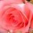 Ramona Forbis | Social Profile