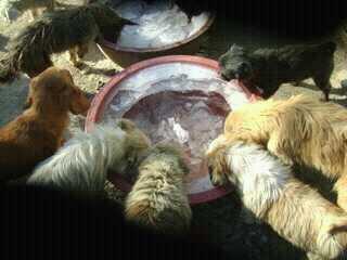 동물을사랑하는 유기견 봉사자들 모임 Social Profile