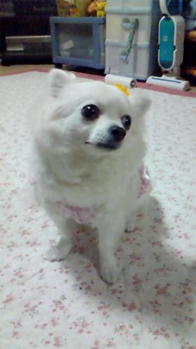 The profile image of kanami_m_