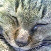 izumi munesue | Social Profile