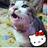 @Shimataro_Chan