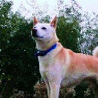 eco relay kameoka | Social Profile