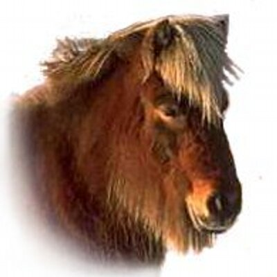 Horse Pheathers   Social Profile