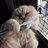 tippler cat (はぶらしねこ) MuIShiC3 のプロフィール画像