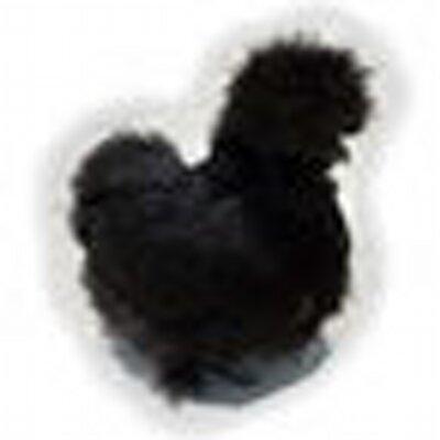 烏骨鶏 うこっけい ウコッケイ | Social Profile