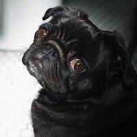Lola Pug   Social Profile