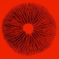 mycelium | Social Profile