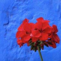 Liberty Czarina | Social Profile